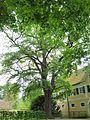"""Naturdenkmal """"Eiche in Irlbach"""".jpg"""