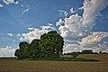Naturdenkmal 3 Linden auf den Roggenäckern, Jettingen, Kennung 81150530008, von Süden.jpg