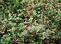 Nature's bounty - geograph.org.uk - 1503621.jpg