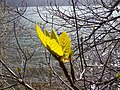 Nature - Natura (17010470421).jpg