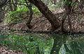 Nature in Margarita Island, Nueva Esparta, Venezuela 12.jpg