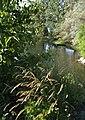 Naturschutzgebiet - Auenwald - panoramio.jpg