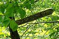 Naturschutzgebiet Ith - Wegweiser (1).jpg
