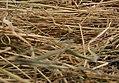 Needle in haystack5.jpg