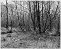 Newberry County, South Carolina. Land Cultivation. (No detailed description given.) - NARA - 522744.tif