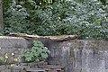 Nisthilfe alter Balken by-RaBoe 01.jpg