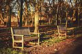 Nonsuch Park benches in the winter sun, Surrey.jpg