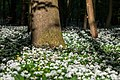 Nordkirchen, Naturschutzgebiet Ichterloh -- 2018 -- 2320.jpg