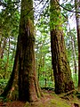 North Cascades National Park (9290000823).jpg