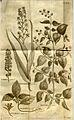 Nova Genera Plantarum01a.jpg