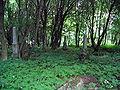 Nowy Cmentarz Zydowski - Przemysl18.jpg