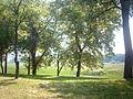 Obedska bara - park nadomak obale Obedske bare.JPG
