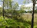 Odenssvaletjarnen Vastergotland Sweden 6June2020.jpg