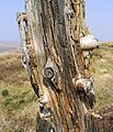Old fence post - geograph.org.uk - 400750.jpg