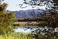 Oranjefloden-0547 - Flickr - Ragnhild & Neil Crawford.jpg