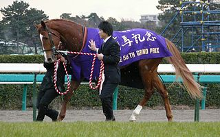 Orfevre Japanese-bred Thoroughbred racehorse