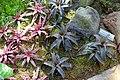 Orthophytum gurkenii - Marie Selby Botanical Gardens - Sarasota, Florida - DSC01047.jpg