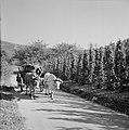 Ossenkar met oogstkuipen op de wijnberg, Bestanddeelnr 254-4190.jpg
