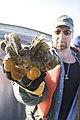 Oyster Restoration Great Wicomico (080216-A-5177B-021) (3293648234).jpg