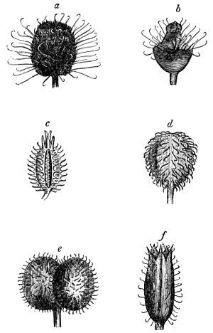 Fruit seeds