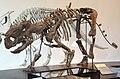 Pachyrhinosaurus Royal Tyrell.jpg