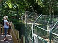 Paignton , Paignton Zoo Lookout - geograph.org.uk - 1483443.jpg