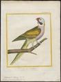 Palaeornis fasciatus - 1700-1880 - Print - Iconographia Zoologica - Special Collections University of Amsterdam - UBA01 IZ18500077.tif