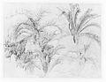Palms MET 1996.564.jpg