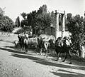 Paolo Monti - Servizio fotografico (Aphrodisias, 1962) - BEIC 6362093.jpg