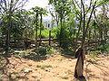 Paraguay 3196.jpg