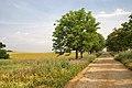 Parc de Gallecs - panoramio.jpg