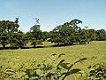 Parkland near Lovesgrove - geograph.org.uk - 25285.jpg