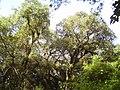 Parque Botánico - panoramio (5).jpg