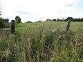 Pasture west of bridleway - geograph.org.uk - 1451456.jpg
