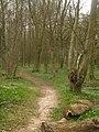 Path in Red Wood Lees - geograph.org.uk - 1805768.jpg