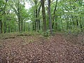 Path in the Hambach forest 10.jpg