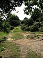 Path through Abel Heath - geograph.org.uk - 553938.jpg