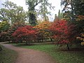 Path through the Acer Glade at Westonbirt Arboretum - geograph.org.uk - 1013724.jpg