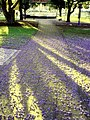 Pathway of shadows, all interspersed with blooms, dividing up the paving into purple petal rooms......Delicately drifting, they billow on the breeze......a sprinkling of paradise from Jacaranda trees...... - panoramio.jpg