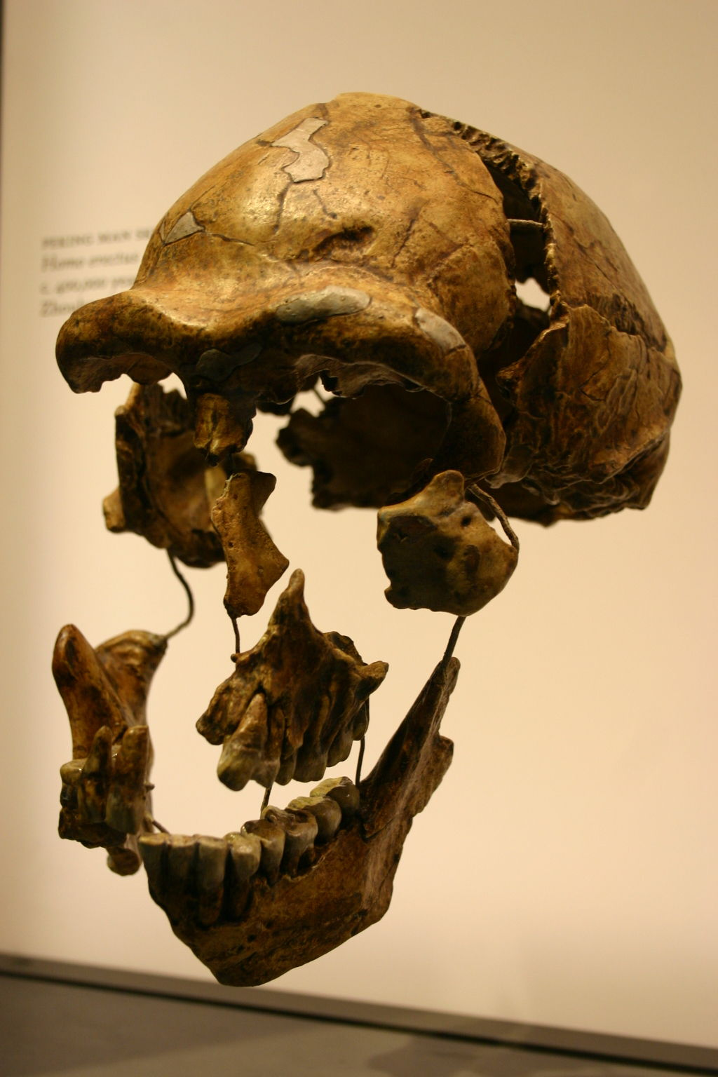 Neanderthal Ancestry 1000+ images about Gen...