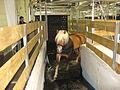 Pferde in Wasser-Führanlage.JPG