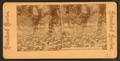 Philadelphia, Fairmount Park. Lily Pond in Pavine, from Robert N. Dennis collection of stereoscopic views.png