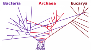 Phylogenetic tree showing extensive horizontal gene transfer between domains and an ancestral colony as the root of the tree.