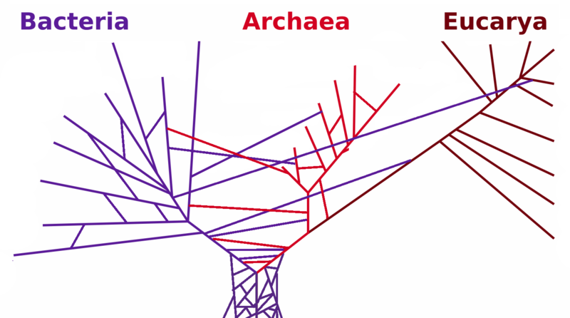 File:PhylogeneticTree horizontal transfers.png