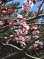 Piante fiorite - panoramio.jpg