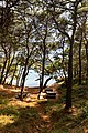 Picnic area in Mljet National Park, Croatia (48738894651).jpg