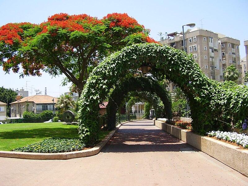 עץ צאלון בפארק מרום נווה