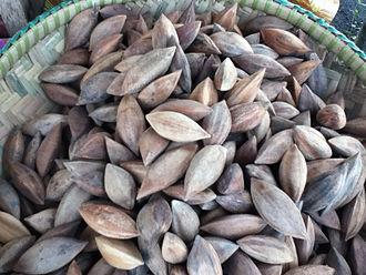 Canarium ovatum - Unshelled pili nuts from the Philippines