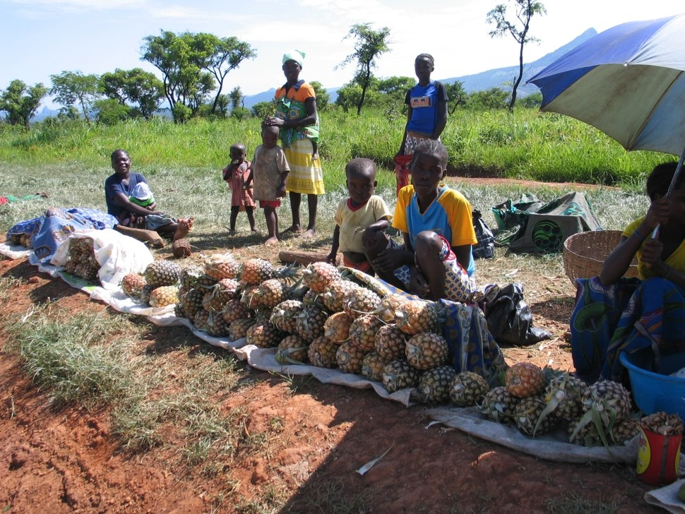 Pineapple Vendors Huambo Quibala