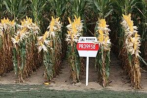 """DuPont Pioneer - Presentation of Pioneer's """"PR39F58"""" maize at Werktuigendagen, Belgium 2009"""